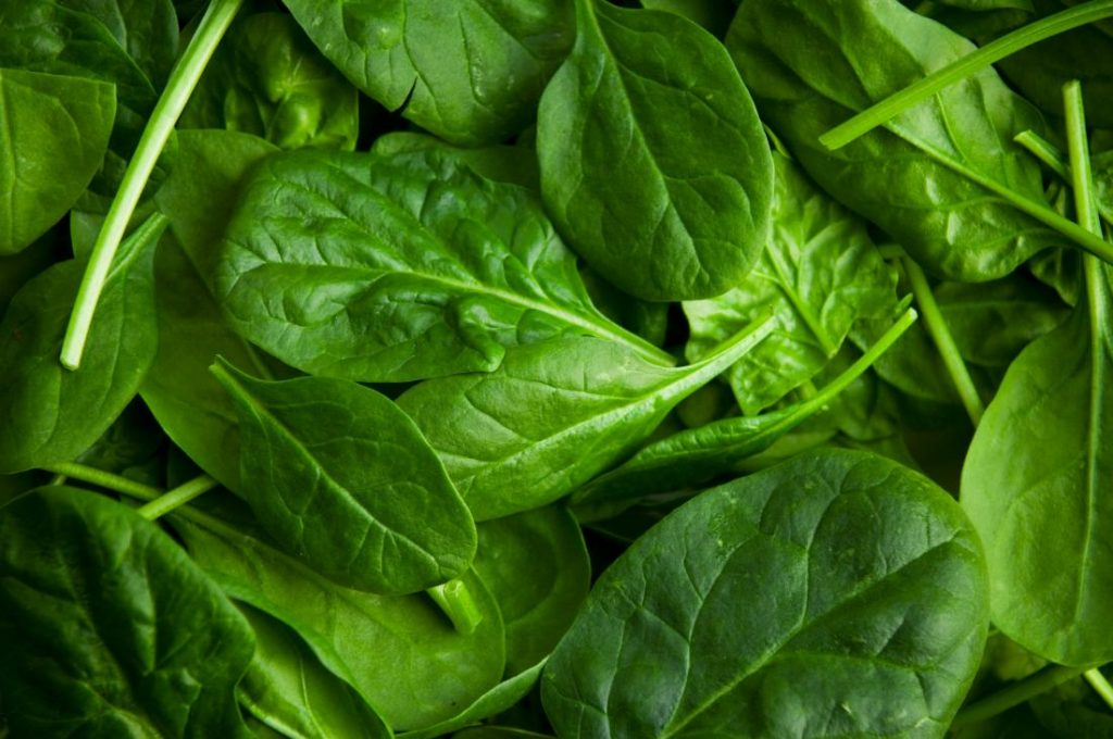 Spinach known as Palak in India